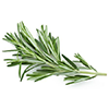 3 sprigs of rosemary. Leaves only
