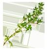 2 tbsp chopped fresh thyme leaves